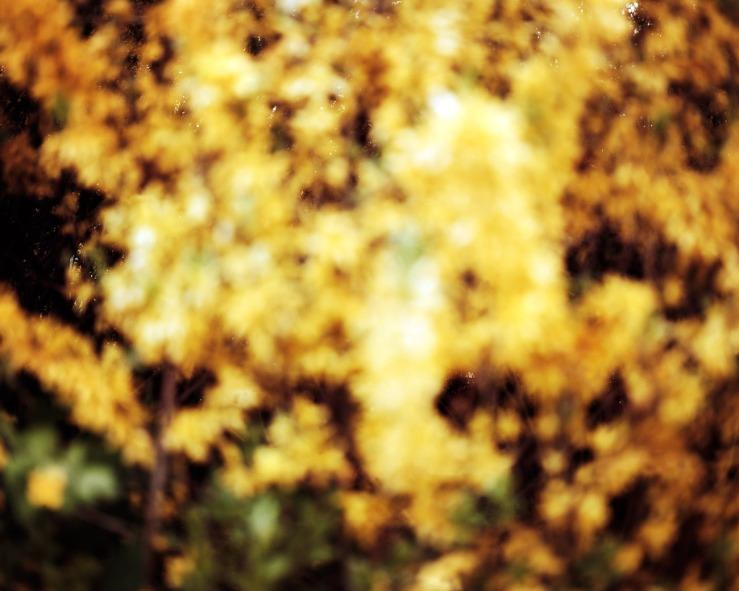yellow-100x80